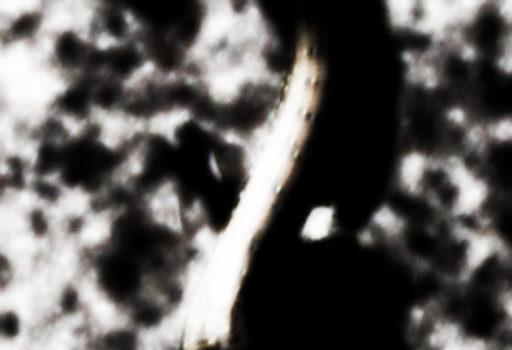 CHI MUORE AMA TACERE (7)